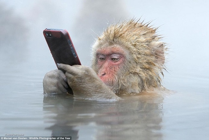 monkey_and_phone